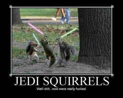 03-jedi-squirrels