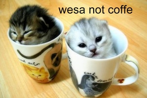 coffe-cats