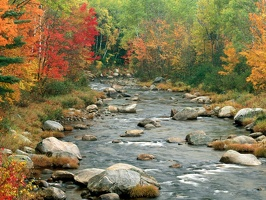 Autumn Colors, White Mountains, New Hampshire