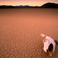 Bone Dry, Death Valley, California||<img src=_data/i/upload/2010/04/05/20100405124148-acdb599e-th.jpg>